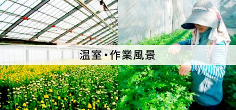 温室・作業風景